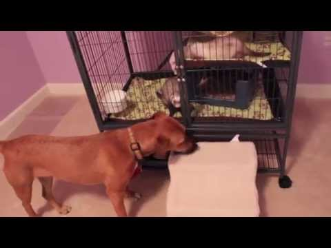 How to Introduce your Dog(s) to your Small Animals