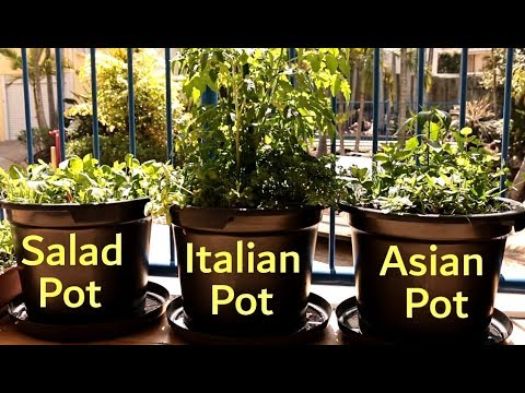 How to Grow a Vegetable Garden on a Balcony | Growing in Small Spaces Ep3 S1