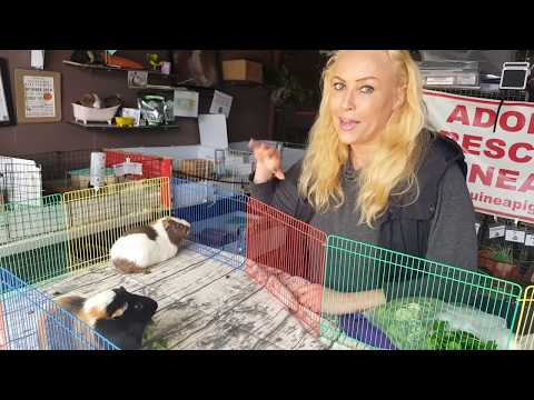 Guinea Pig Boy Bonding with Saskia