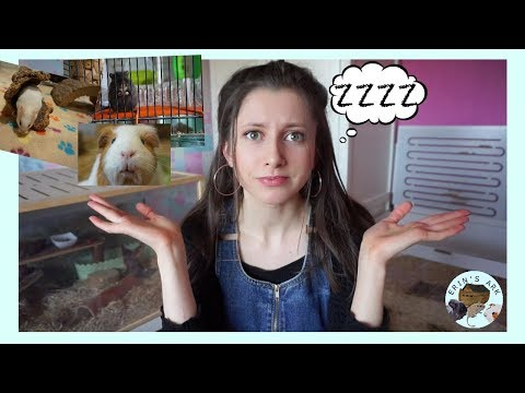 Tips For Sleeping With Pets In Your Room