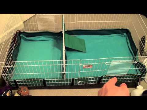 Guinea Pig Cage Set Up
