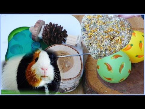 All of my Guinea Pigs' Chews & Toys