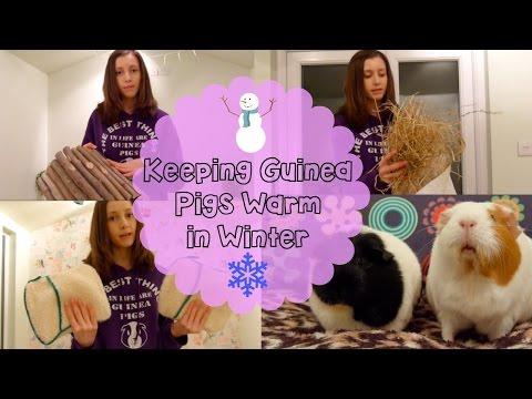 Keeping Guinea Pigs Warm in Winter