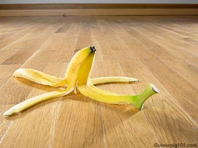 Can Guinea Pigs Eat Bananas Peels