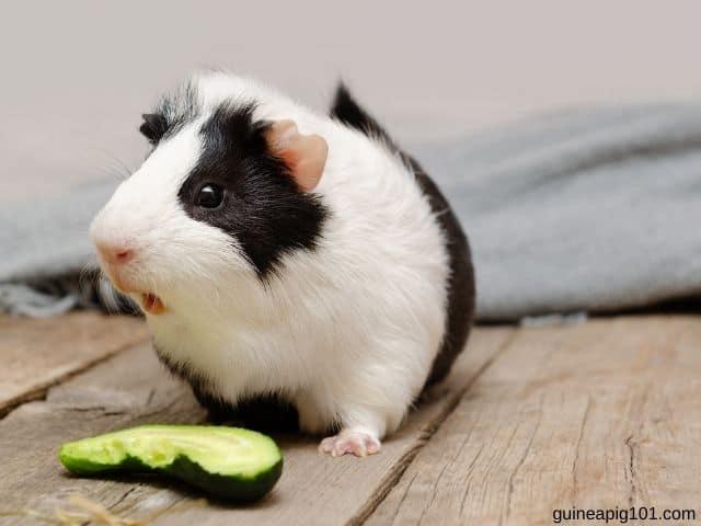 Can guinea pigs eat cucumber peels