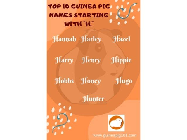 Guinea Pig name starting with h