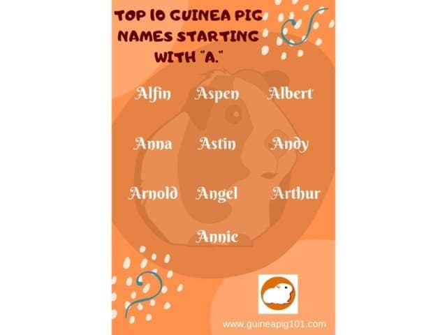 Guinea Pig name starting with a