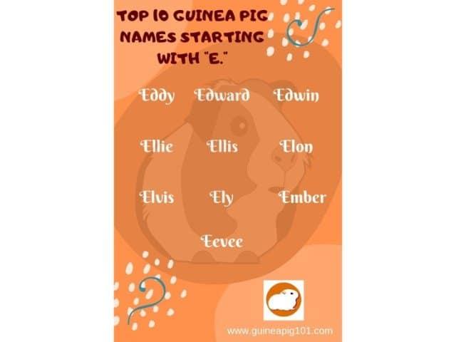 Guinea Pig name starting with e