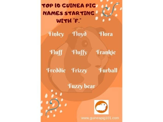 Guinea Pig name starting with f