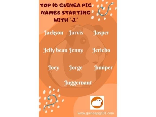 Guinea Pig name starting with j