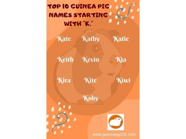 Guinea Pig name starting with k
