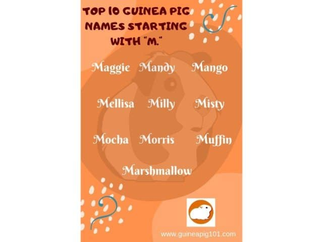 Guinea Pig name starting with m