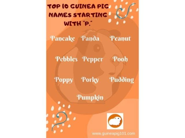Guinea Pig name starting with p