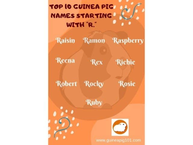 Guinea Pig name starting with r