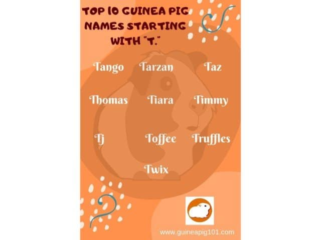 Guinea Pig name starting with t