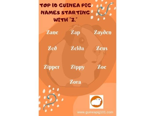 Guinea Pig name starting with Z