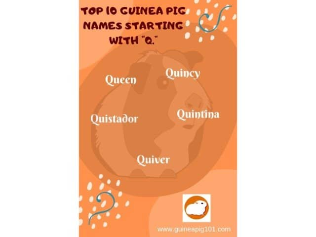 Guinea Pig name starting with q