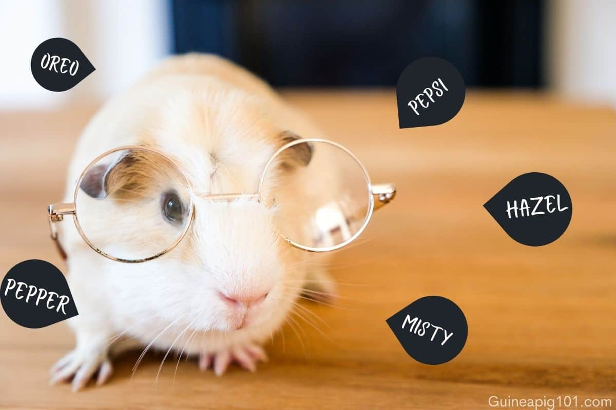 What is a good name for a boy guinea pig?