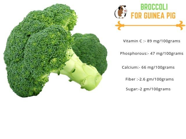 broccoli for guinea pigs