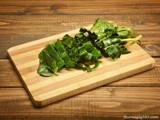 can guinea pigs eat spinach every day