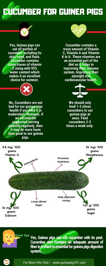 Cucumber For Guinea Pigs