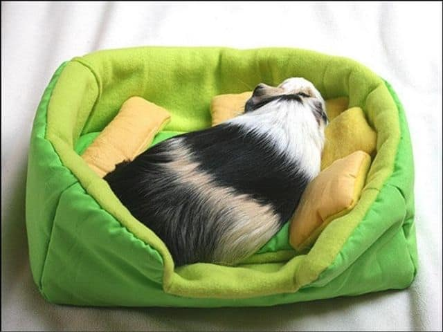 etsy guinea pig sofa pet fleece bedding with absorbent pee pad and pillows