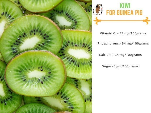 Benefits of kiwi for guinea pigs