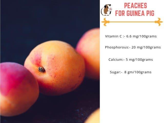 Can Guinea pig eat peaches