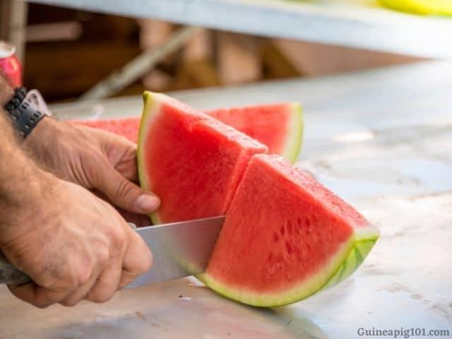 prepare watermelon for guinea pigs_