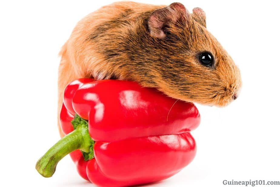 Are bell peppers good for guinea pigs?