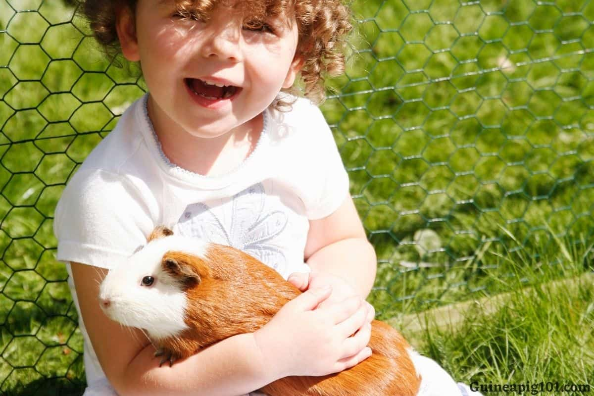 What care does a guinea pig need
