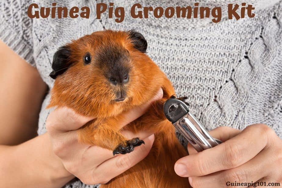Guinea Pig Grooming Kit Brush Clipper, Can You Use Microfiber Towels For Guinea Pig Bedding