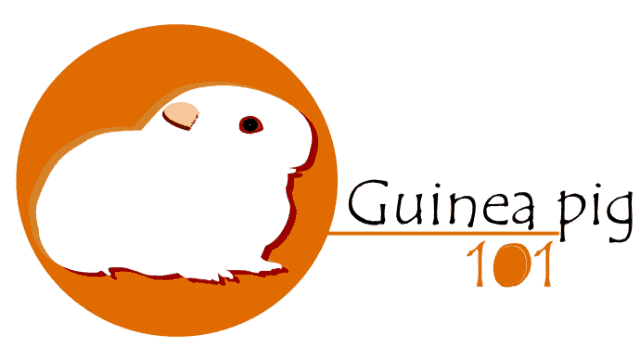 Guinea Pig 101 » Everything About Guinea pigs