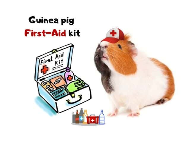 Guinea pig first aid kit