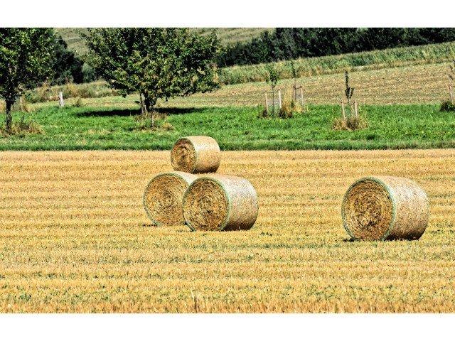 Guinea pig meadow hay