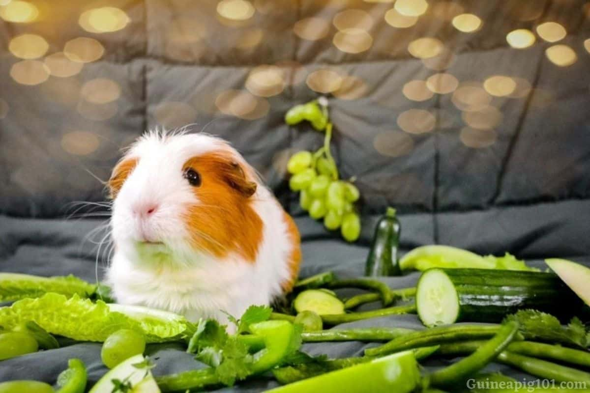 Can Guinea Pigs Eat Green Beans? (Serving Size, Risks & More)