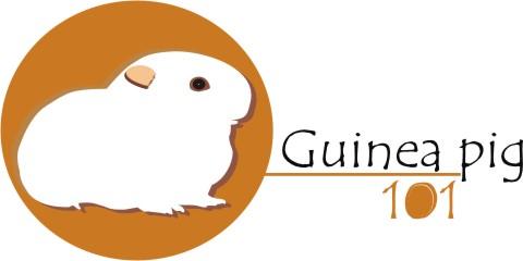 Guinea pig 101 Logo
