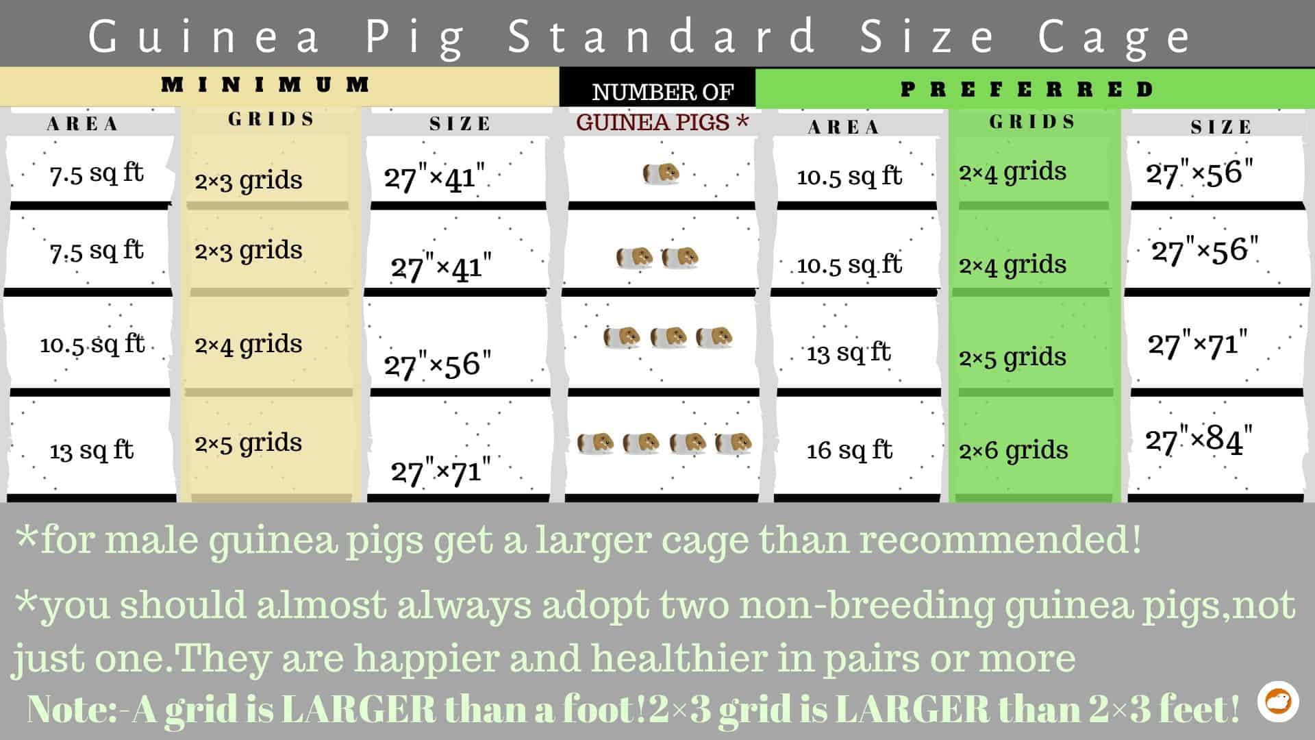 Guinea pig cage size