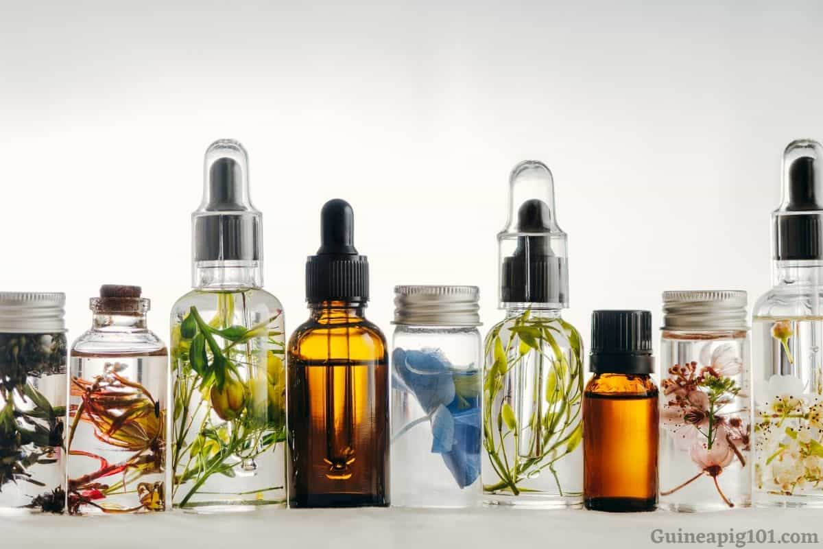 What essential oils are toxic to guinea pigs