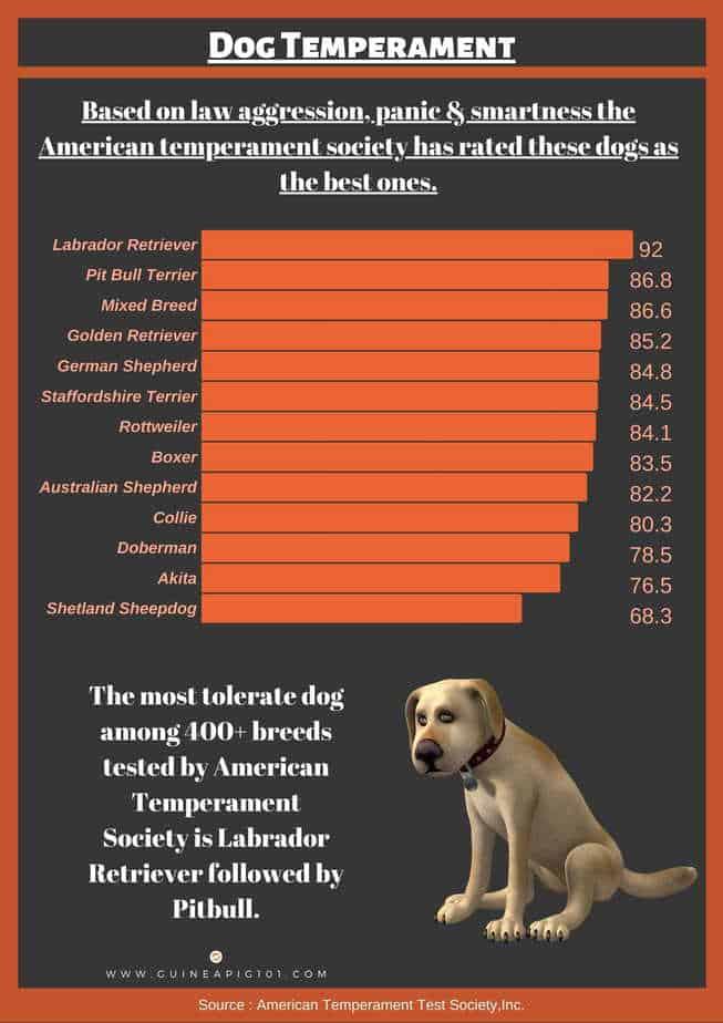 dog's temperament