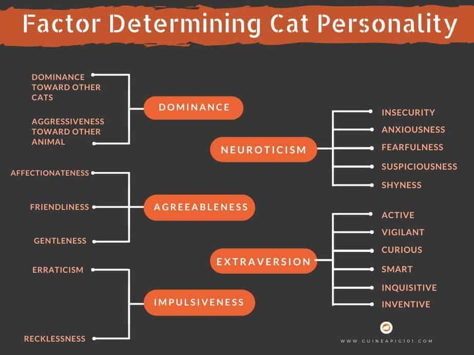 Understanding Cat's temperament
