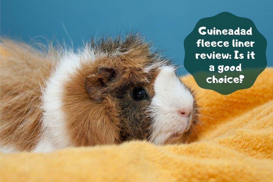 Guineadad fleece liner review