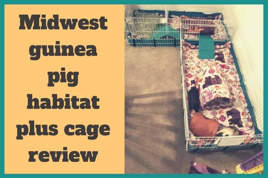 Midwest guinea pig habitat plus cage review