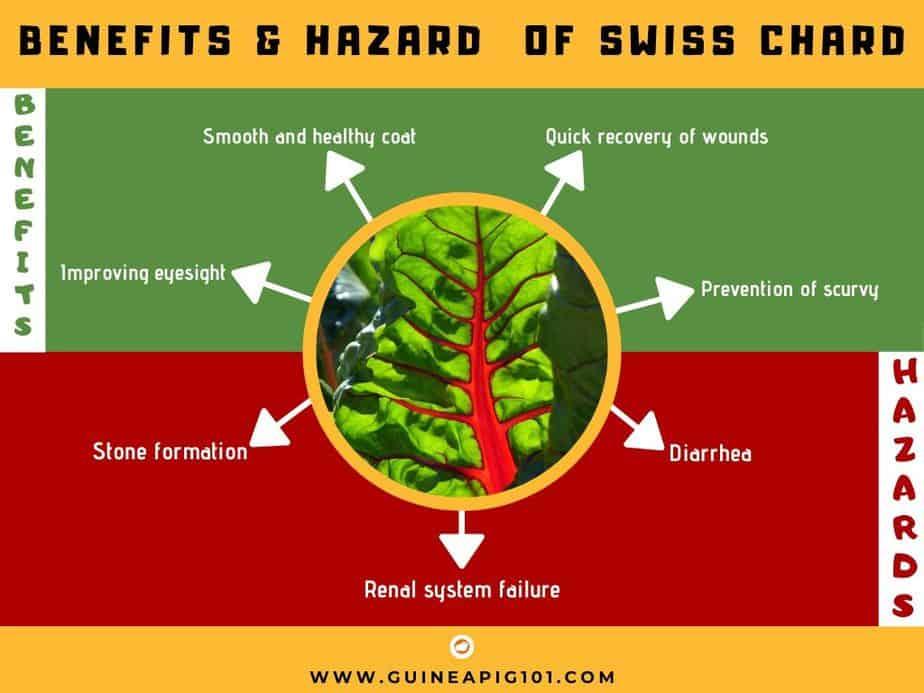 BENEFITS & HAZARD OF SWISS CHARD