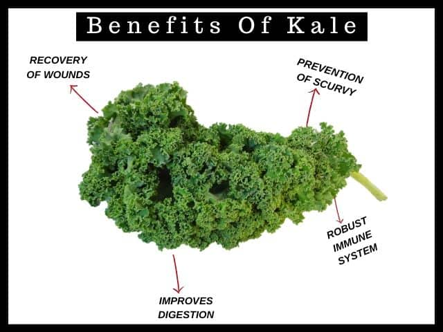 benefits of kale for guinea pigs