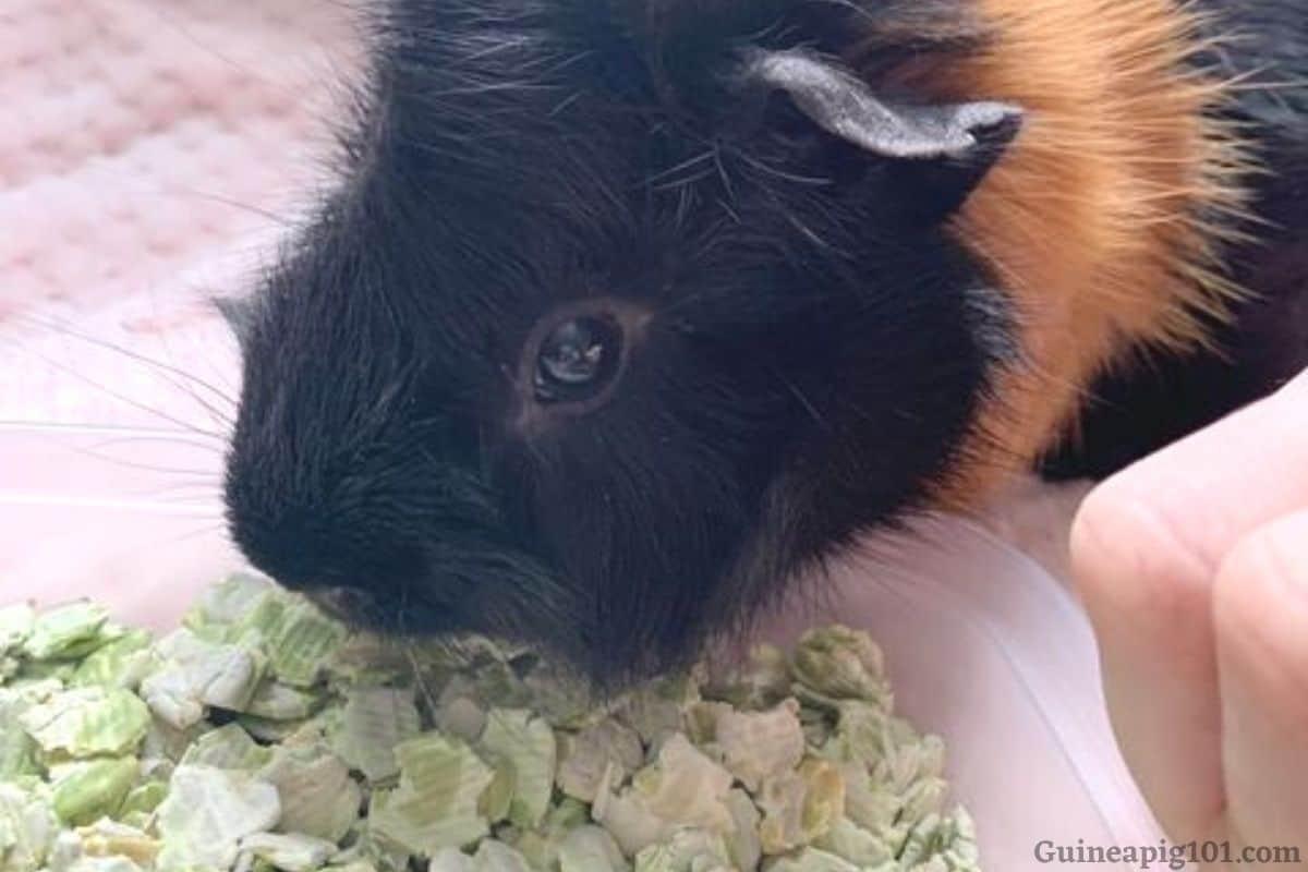 Can guinea pigs eat pea flakes