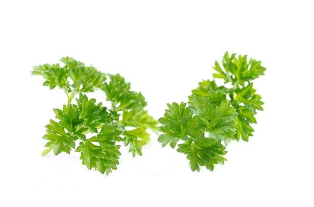 How much parsley can guinea pigs eat?