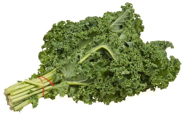 kale for guinea pigs