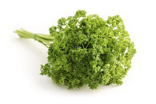 parsley for guinea pigs
