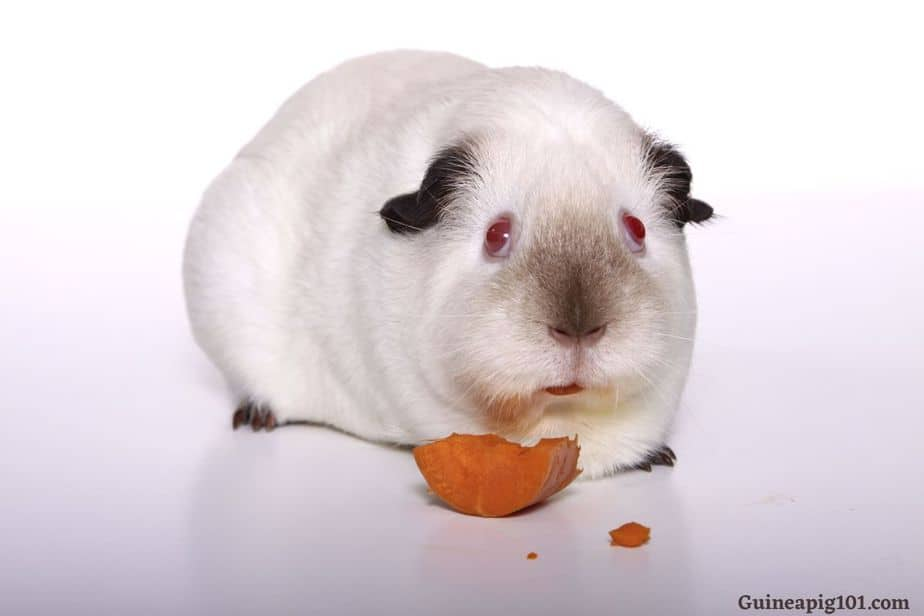 Are red eyed guinea pigs lethal?